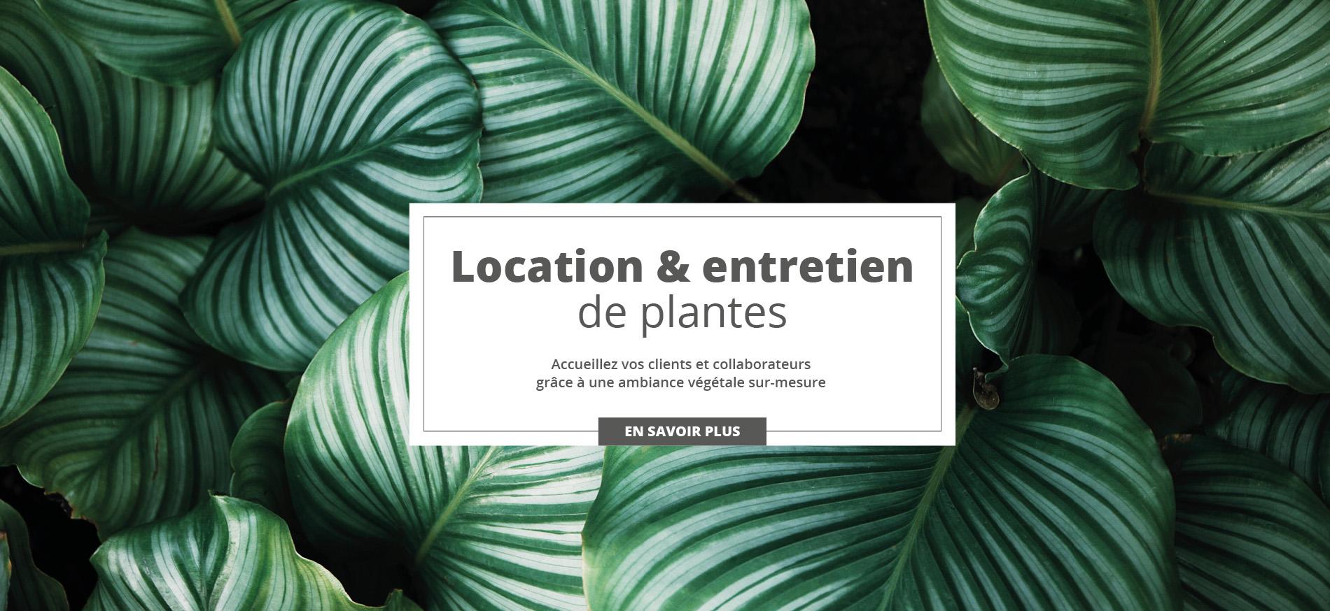 Location & entretien de plantes