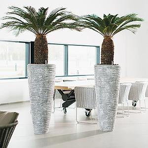 Flora Concept plantes originales interieur 3