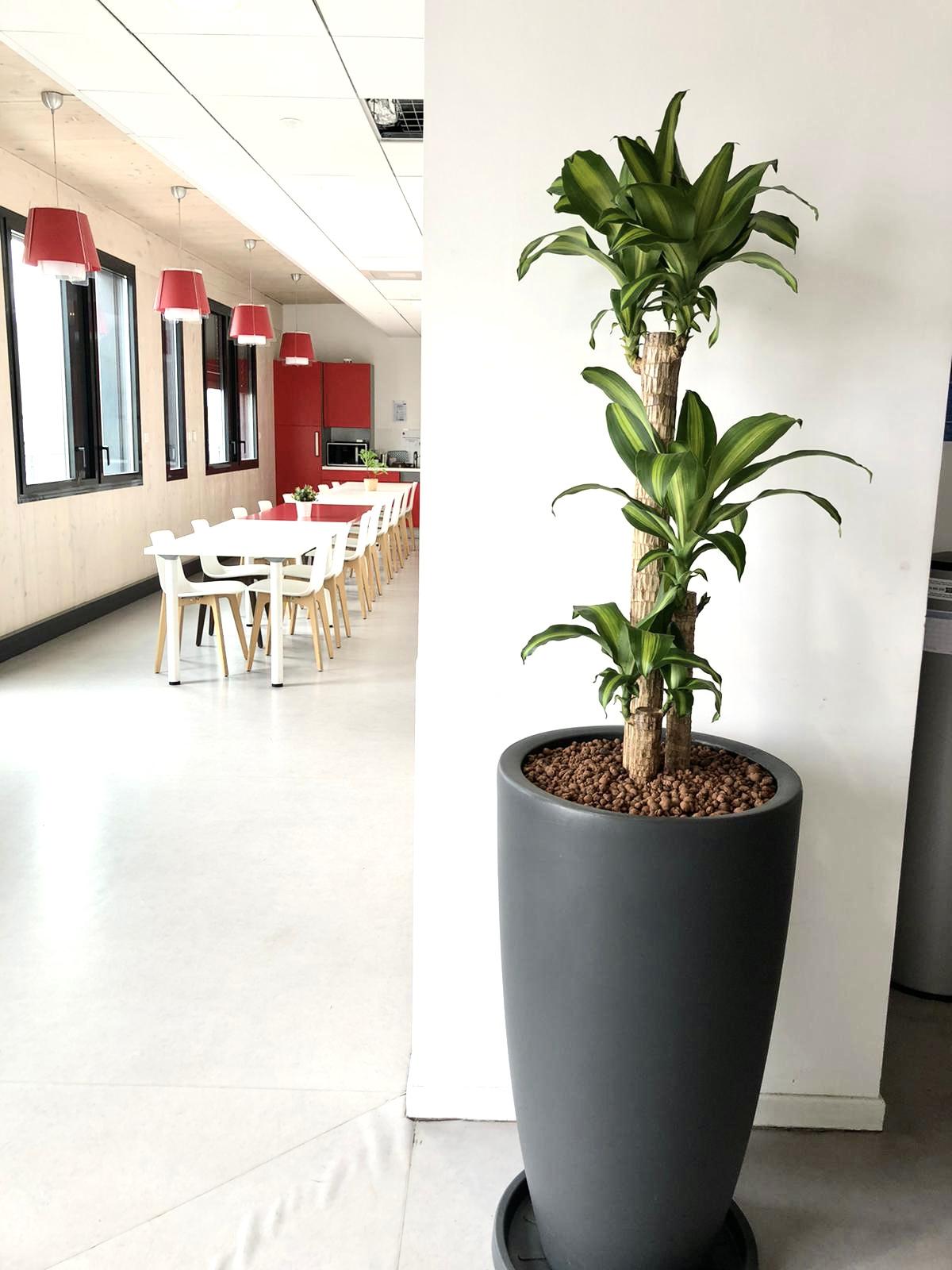 Flora Concept_Nexity Marseille 4