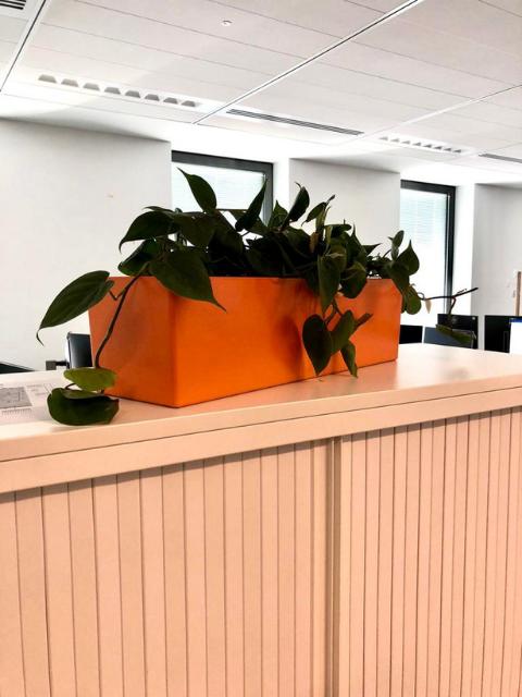 Flora Concept_Banque 2