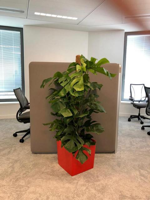 Flora Concept_Banque 3