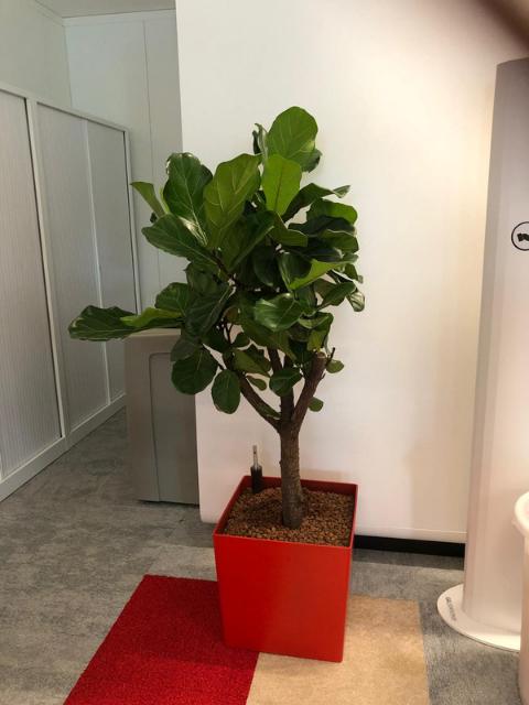 Flora Concept_Banque 5
